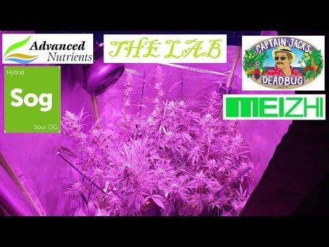 Legal Medicinal Medical Cannabis Marijuana Patient.