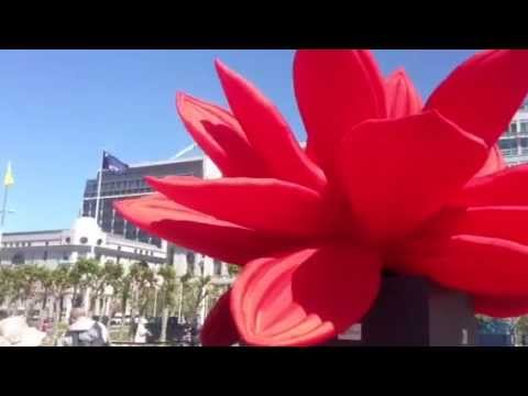 The big red breathing lotus flower youtube the big red breathing lotus flower mightylinksfo