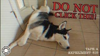 Funny Husky Sleeping Positions (Dharma Initiative: Video 4)