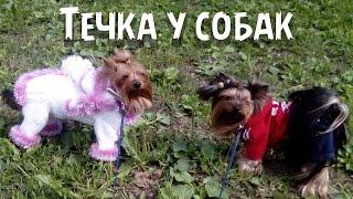 Течка у собак(Доброго времени суток, друзья! Течка у собак http://youtu.be/3FjL73-e2p8 - физиологическое явление. Вы подробно узнаете..., 2015-07-30T20:01:51.000Z)
