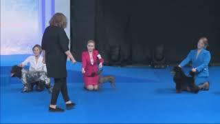 Россия 2018  Лучшая собака среди пород, не признанных FCI