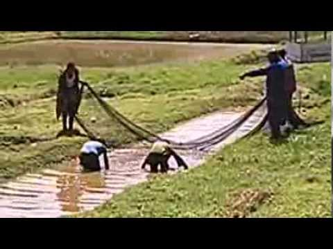 Fish pond management 1 what you need to know funnydog tv for Fish pond management