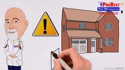 Issues with pest living in your attic - Attic Pest Removal - Attic Pest Control