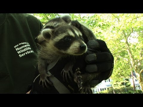 Humane Wildlife Services