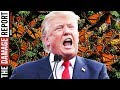 Trump To Destroy National Butterfly Center mp3