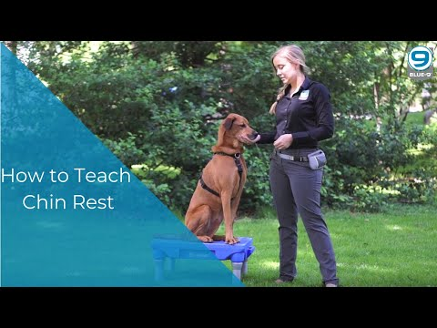 How to teach your dog 'Chin Rest'