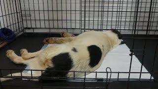 UTV. Оренбуржцы утверждают что началась массовая травля собак