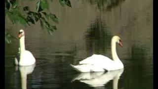 Лебединый вальс.avi