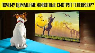 Действительно ли собаки и кошки смотрят телевизор