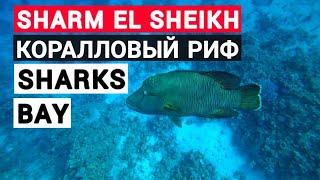 Отдых в Египте 2021 Лучшие рифы Шарм эль Шейха для новичков Sharks Bay Concorde Hilton Sierra