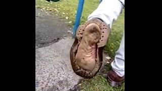 Туфли только