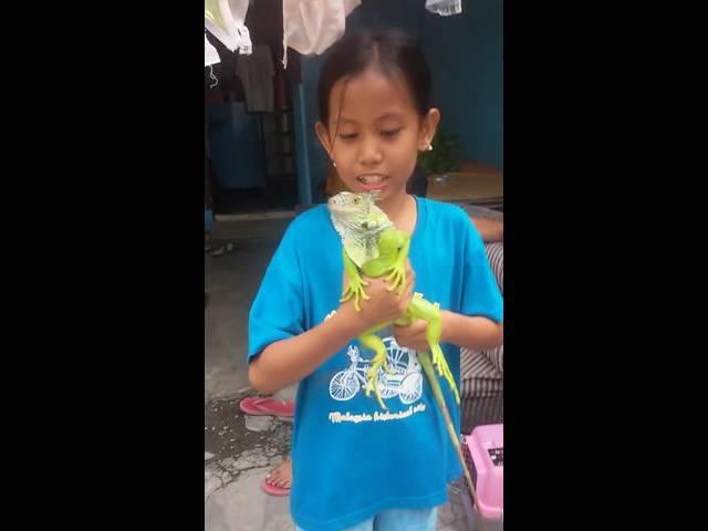 Memegang iguana geli rasanya