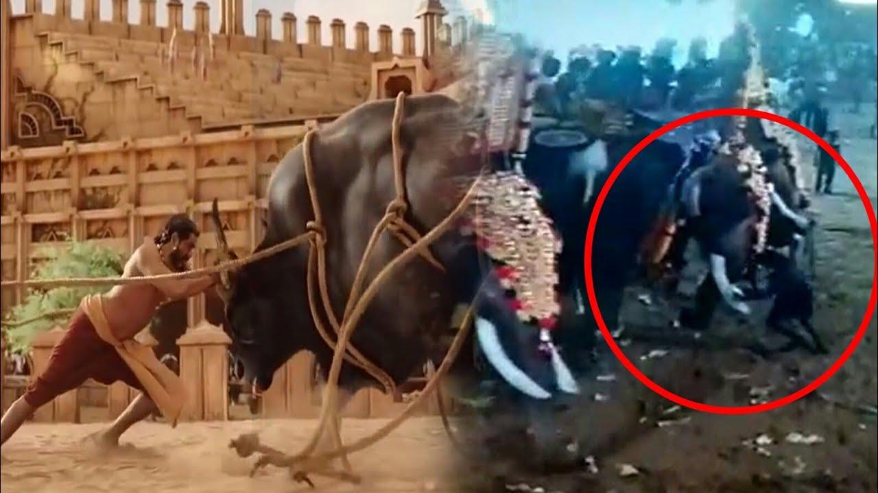 Bahubali യെ വെല്ലുന്ന Real life hero at ചെറായി elephant  |Cherai
