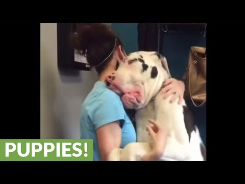 Great Dane thrilled to see owner after days apart