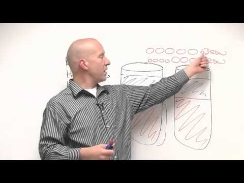 WellnessFX: Red Blood Cell Indices Part 1 with Bryan Walsh