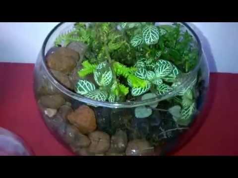 Tips jardiner a los terrarios funnydog tv - Plantas para terrarios ...