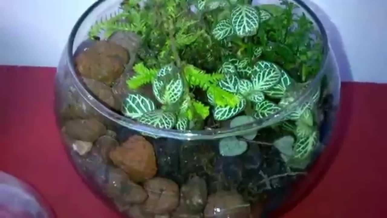 Terrario de plantas youtube - Como construir un terrario ...
