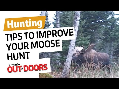 Tips To Improve Your Moose Hunt