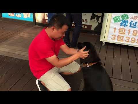 Toby is sweet meeting strangers.