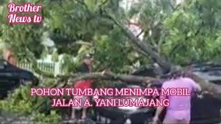 Download BERITA HARI INI POHON TUMBANG TIMPAH MOBIL JL. A. YANI LUMAJANG