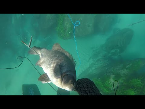 Spearfishing Newcastle NSW Australia