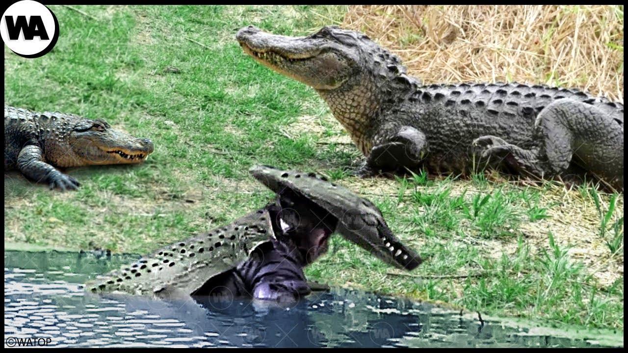 Download The Man Who Trolls Crocodiles