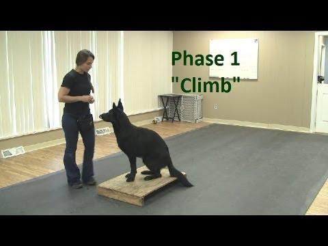 How to Train a Dog to 'Climb' (K9-1.com)