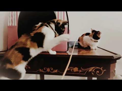 My Calico Kittens