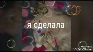 "Викторина ""угадай породы собак""   1часть[Kitti Bleu]"