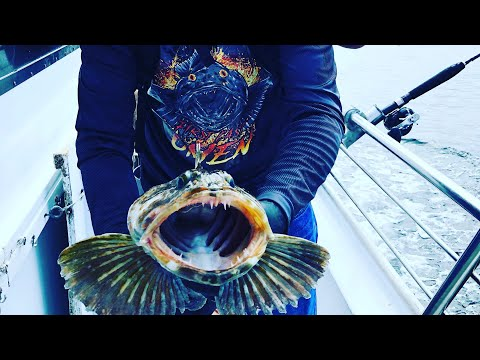 Morro Bay CA Fishing Charter Out Of Morro Landing 2019