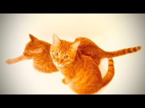 Котики на карантине #берегитекотиков #оставайтесьдома #stayhome