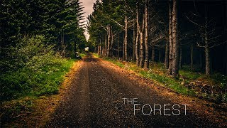 Iceland The Forest (dji goggles, mavic, osmo...)