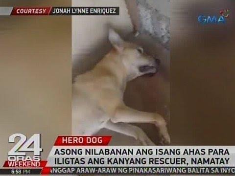 24 Oras: Asong nilabanan ang isang ahas para iligtas ang kanyang rescuer, namatay