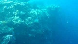 Potapeni  - hloubka 10 metru bez bomby - Shar El Sheik 2008 thumbnail