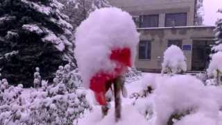 розы под снегом(, 2013-10-06T18:54:44.000Z)