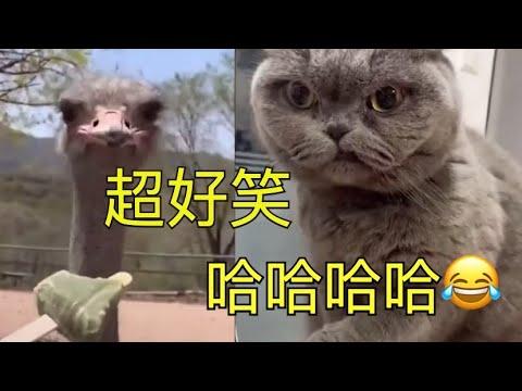 【搞笑-配音】2021-爆笑东北话配音-eps.47-|搞笑神配音伴你度过愉快周末~~-|-被猫威胁了-|-保你笑到肚子抽筋-喘不上气-笑出腹肌-😂😂😂