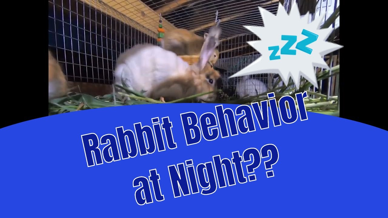 What do rabbits do at night when no one is around?