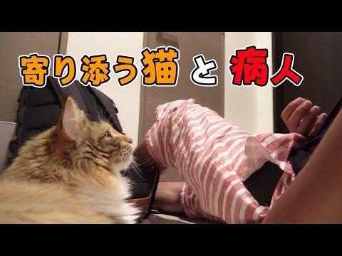 猫は病院へいく飼主の異常を感じとれるのか!?