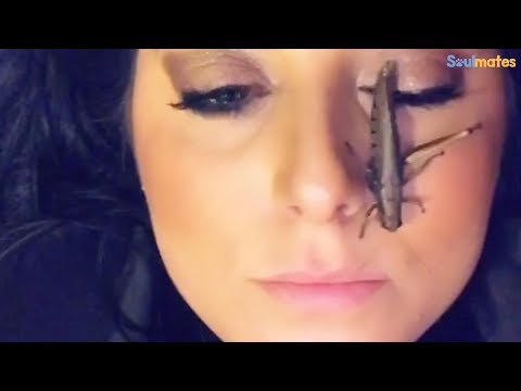 Woman Rescues A Grasshopper And Gives Her The Best Life Ever | The Dodo Soulmates