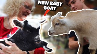 surprising-my-grandma-with-a-new-baby-goat-for-christmas