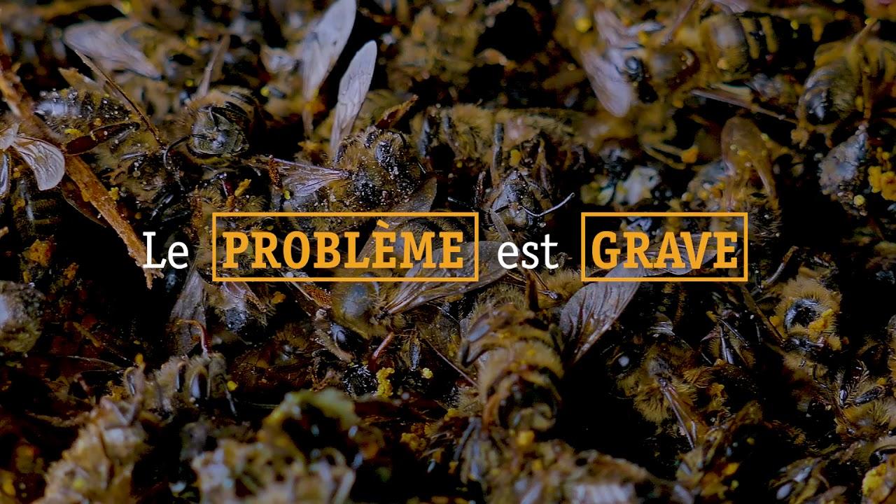 Journée mondiale de l'abeille en Guinée