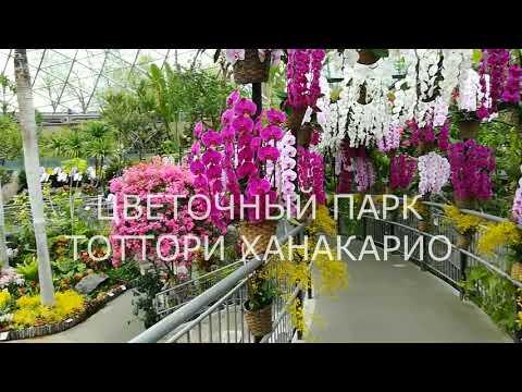 "Путешествие на ""японскую дачу"" на пароме Владивосток-Донгхэ-Сакаиминато и обратно."