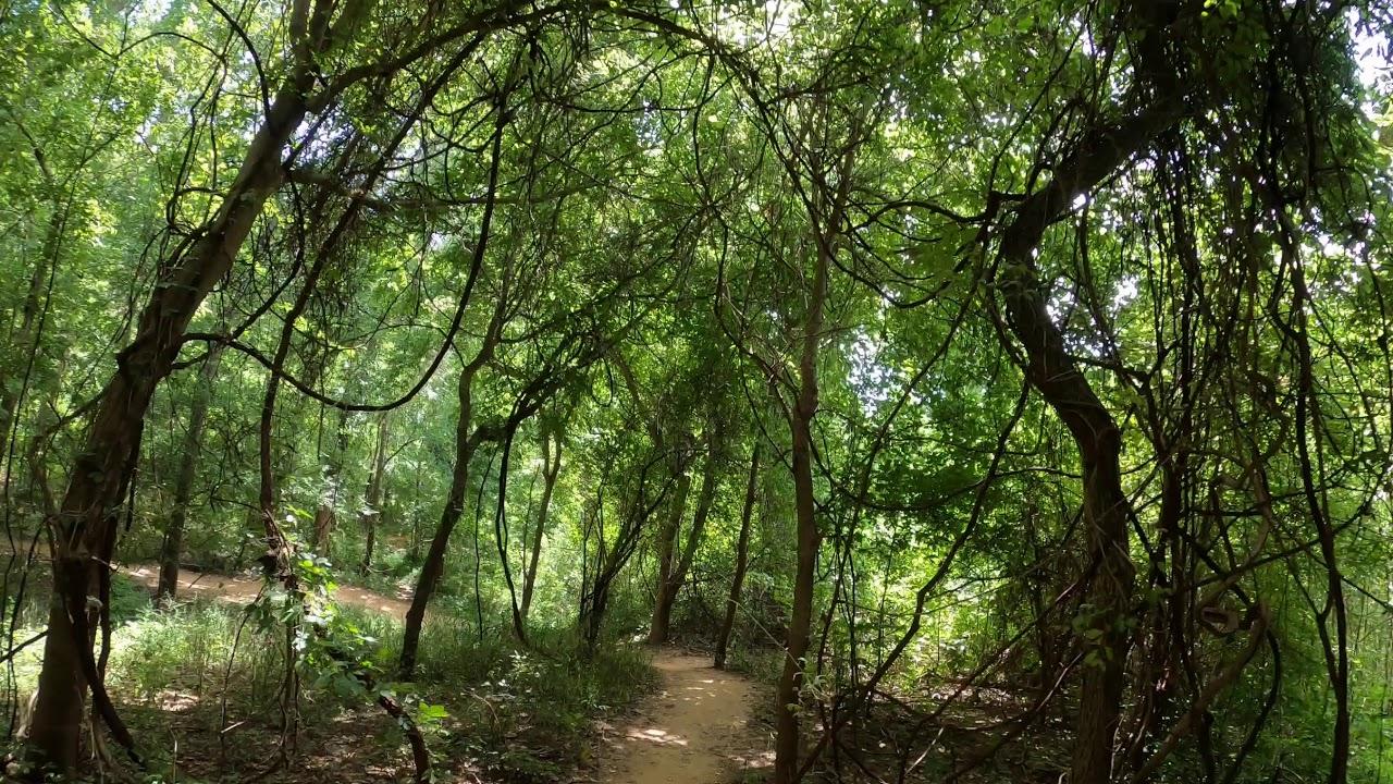 Sugar Land Memorial Park Trails - YouTube
