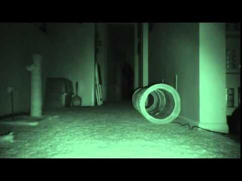 Что кошки делают ночью?! ужасы...
