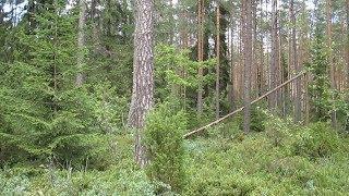 Природа возле д. Поречье, Гродненский р-н (27 июля 2015 г).
