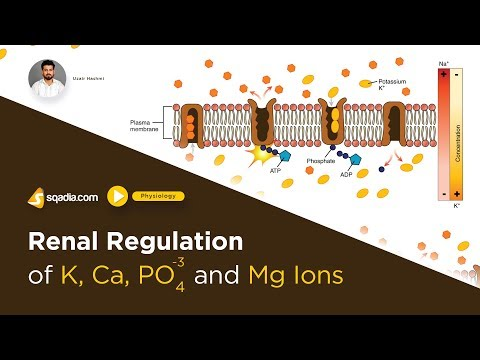 Renal Regulation Of K, Ca, PO4 And Mg | Guyton Hall Textbook Of Medical Physiology Lecture