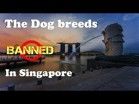 10 Dog breeds Banned in Singapore