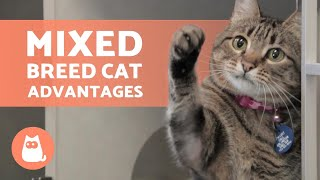 5 ADVANTAGES of ADOPTING a MIXED BREED CAT  Discover the Domestic Breed! ❣