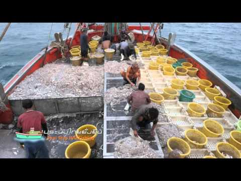 Thai Stop IUU Fishing Documentary Chapter 2