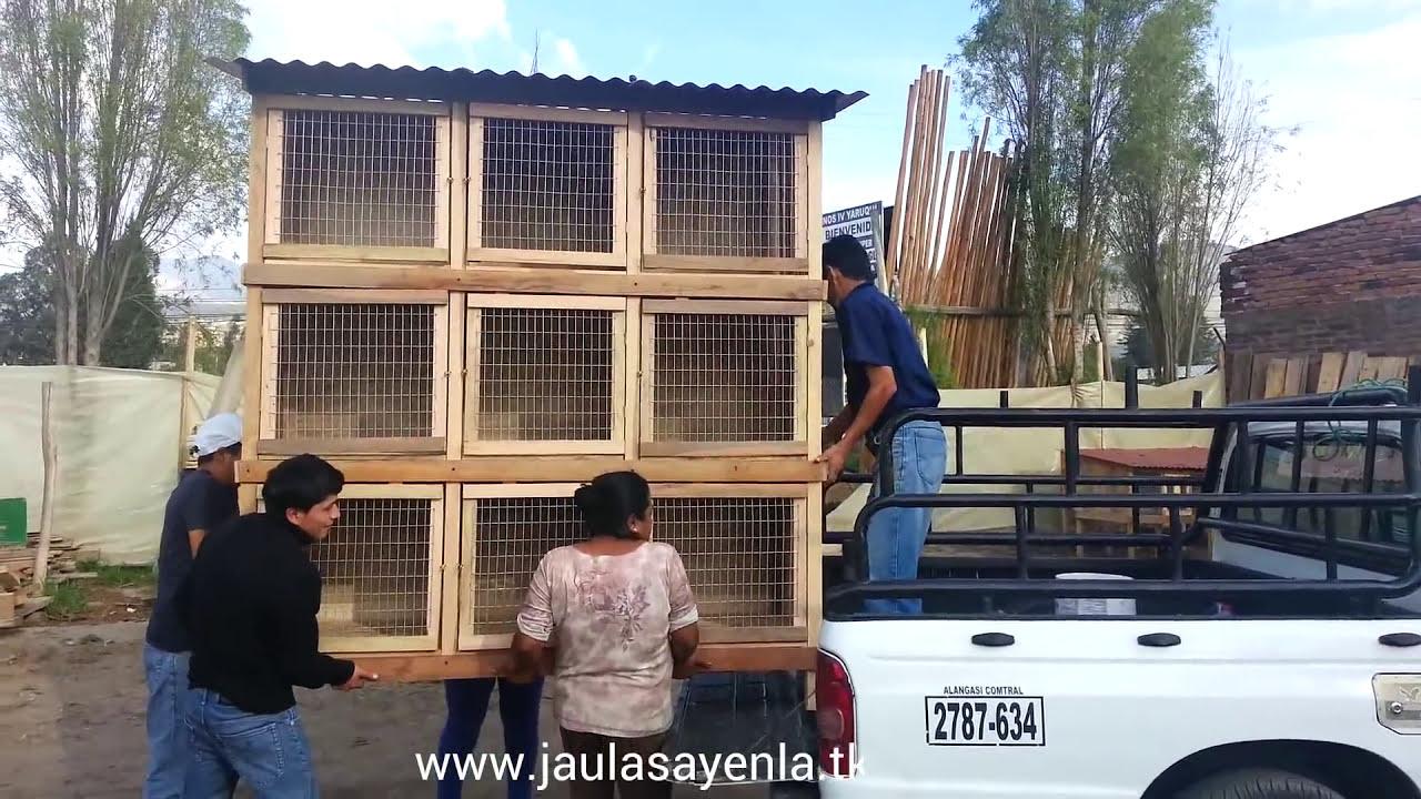Jaula de gallos de pelea 9 casilleros cage fighting for Como hacer un criadero de cachamas